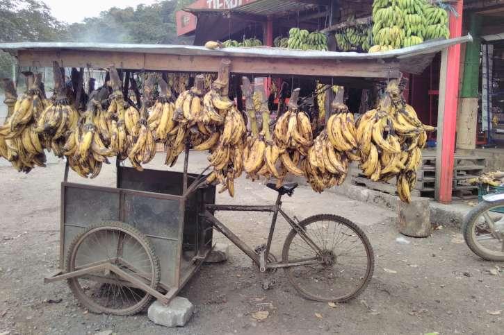 Bananen in Guatemala.