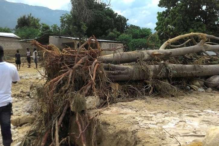 Beschädigter Baum nach Sturm